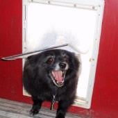 happy dog in doggy door